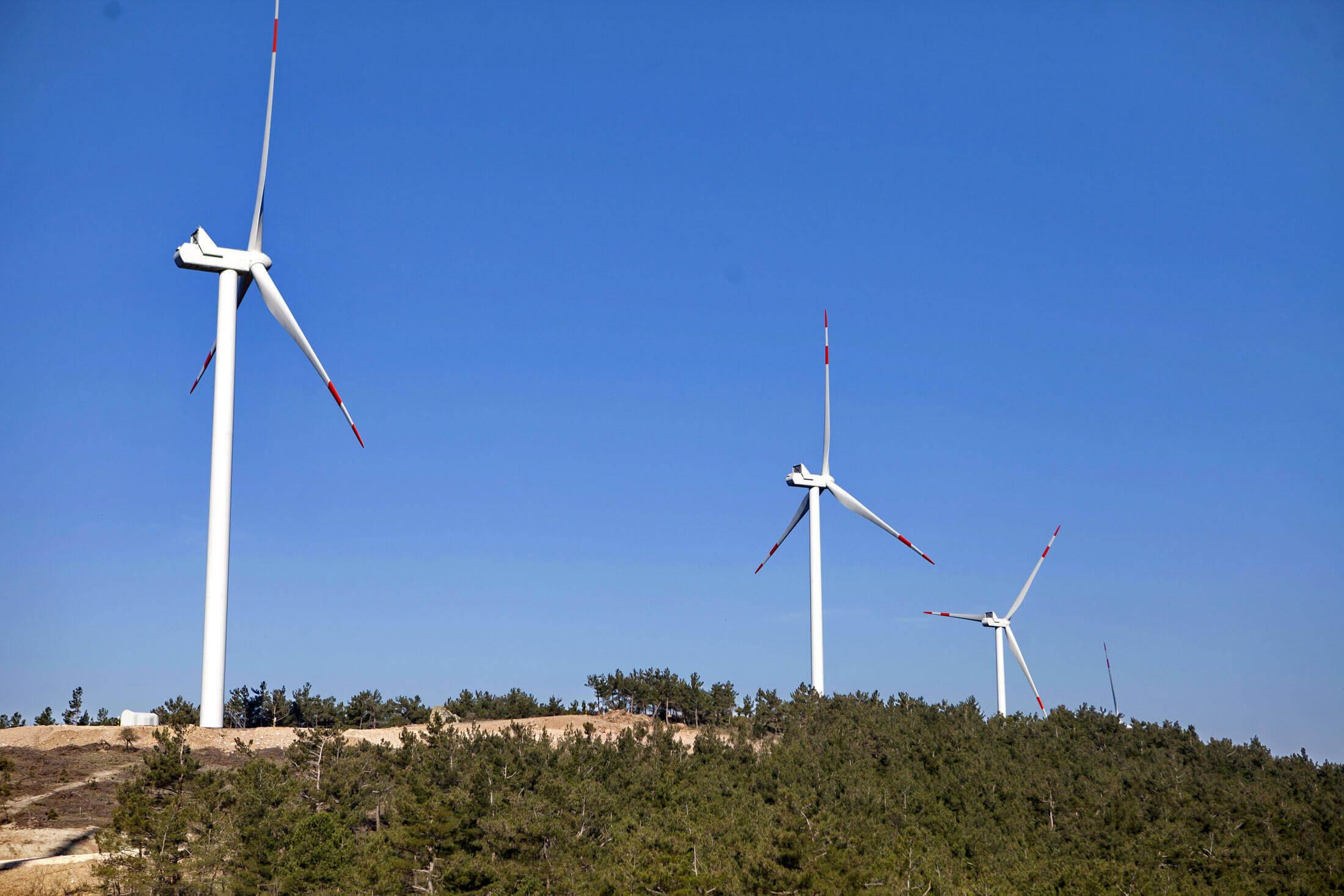 project-koru-wind